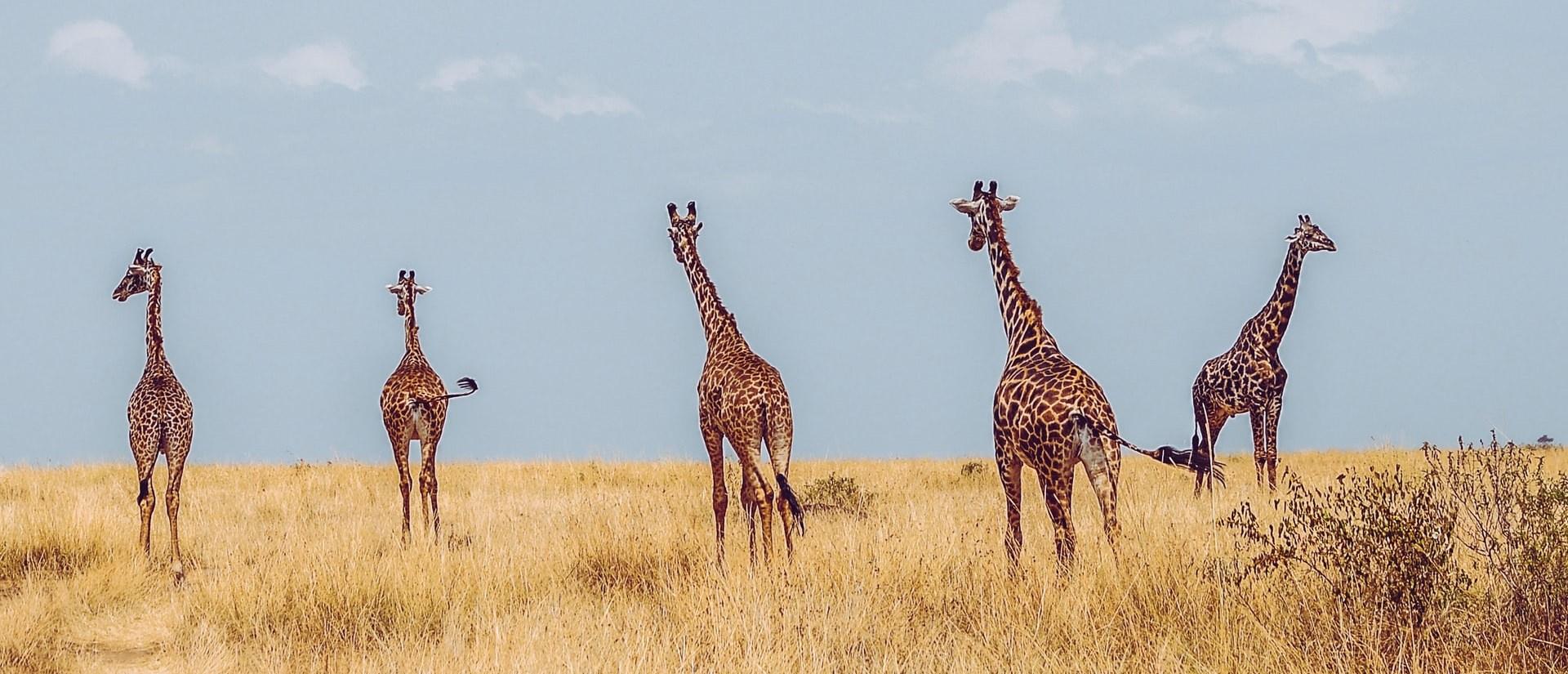 アフリカ地域の旅行先一覧